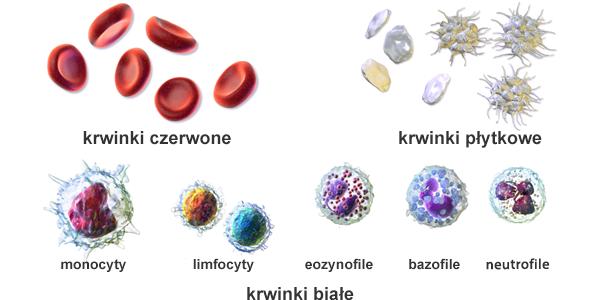 składniki krwi